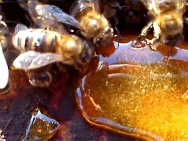Кормление пчёл