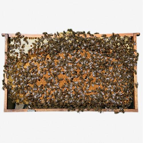 Бджолопакет