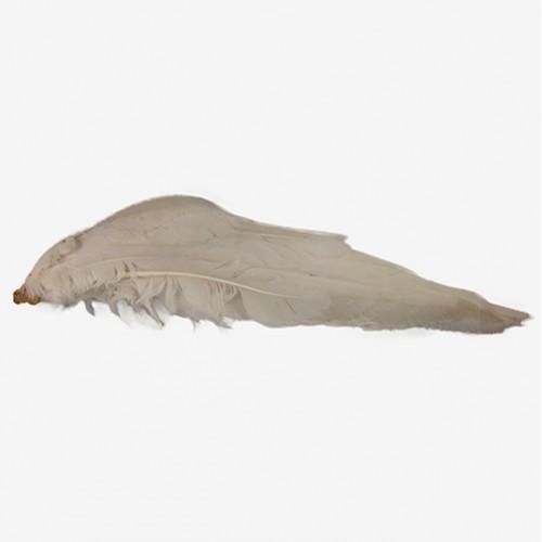 крыло (гуся)